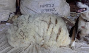 Terry's big fleece